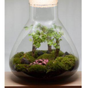 terrarium zen